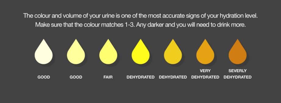 Pedalar no calor: formas de gotas mostram as cores da urina e seus significados